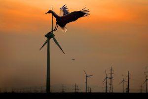 Windkraftanlage mit Vogel